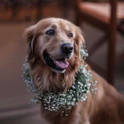 Searches for dog ring bearer increases