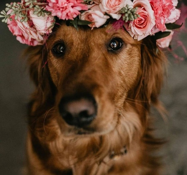 How to incorporate your beloved pet into your wedding